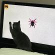 くー    猫のための動画