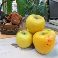 りんご三兄弟の三男 シナノゴールド