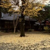 明日から、師走。金沢市尾山町、大谷廟所。