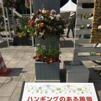 札幌大通り花フェスタ