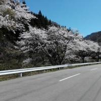 春ちゃんのチャリ旅