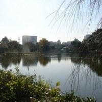 千葉公園 散歩に最適な公園です。