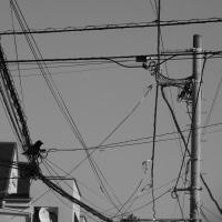 電線、月、そして、烏