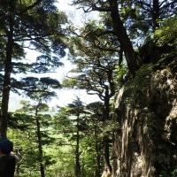 北限のコメツガ林