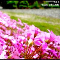 image2376 花は変える
