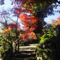 椿山荘の紅葉2016年ー1