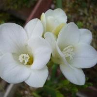 旬の花アラカルト・・・Ⅱ