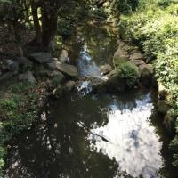Muston park
