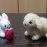 羊毛で、ホーランドロップラビット