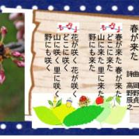 千葉の桜で楽しもう