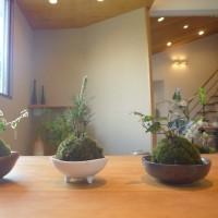 【6月】木づつみ教室ご案内