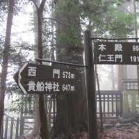 ~大津、京都、奈良の旅 第二日目 2 木の根道~