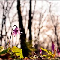 春色がひろがる・・・。