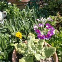 我が家の3月の花