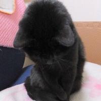 黒いカタマリ その2