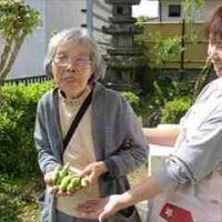 5月8日(月)晴れ 利用者9名 そら豆収穫2人・皮むき全員 古参竹