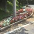 宝登山ロープウェイ 花壇植栽