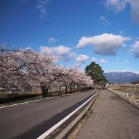 ★増水した薄川と桜並木&北アルプス・墓守のサクラ