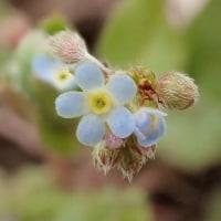 小貝川周辺で見た花
