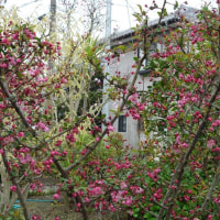 姫ちゃん宅の春