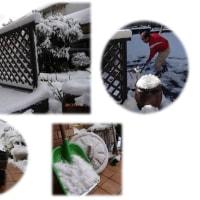 今朝も・・・雪です・・・・
