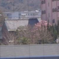 3月22日(火)晴