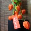 新月に祇園祭