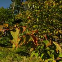 蓼科山荘より 紅葉の始まり