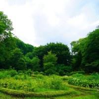 あまり梅雨らしくない神代植物公園 其の3