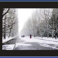 雪の西大路.