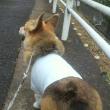 雨のち散歩のちシャンプー