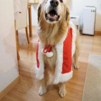 サンタのマントでワクワクしちゃう♡