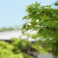 第152回古都旅歩き 即成院、新熊野神社、智積院