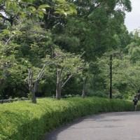 於大公園の花 : ヤマモモ ・・・ 今日も朝から親子連れが多くサイクル広場子供広場がいっぱいでした。