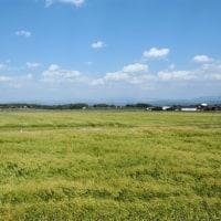 風に揺れる麦畑