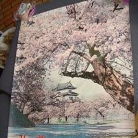 昭和40年(1965年)?の弘前さくらまつりのポスター