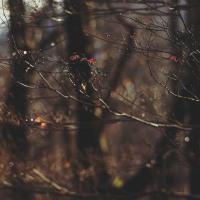 晩秋から初冬へ