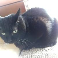 ロックオンする妹猫