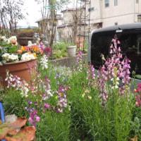庭が少しづつ春らしく