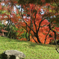 三篠川土手を歩いて縮景園へ、晩秋ね