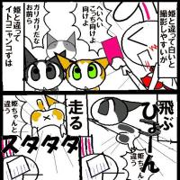 猫(=ΦエΦ=) の写真の苦労