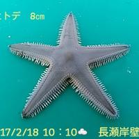 笑転爺の釣行記 2月18日☁ 長瀬・久里浜