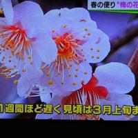 2/28 森田さんの 梅をアップ よく見るとすごく美しい花