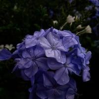 5月に見た花。