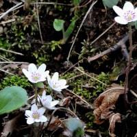 春の小さな旅3