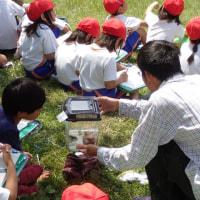 城陽小学校 町探検