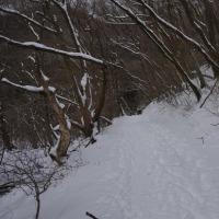 冬のくじゅう19(ヨシ)
