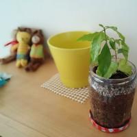 ガラス瓶に穴を開ける☆コーヒーの木