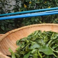 ゆずの葉茶を作ってみる!