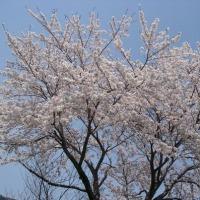 遠野に桜とSLが来た